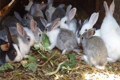 Rabbiting Tuition Classes
